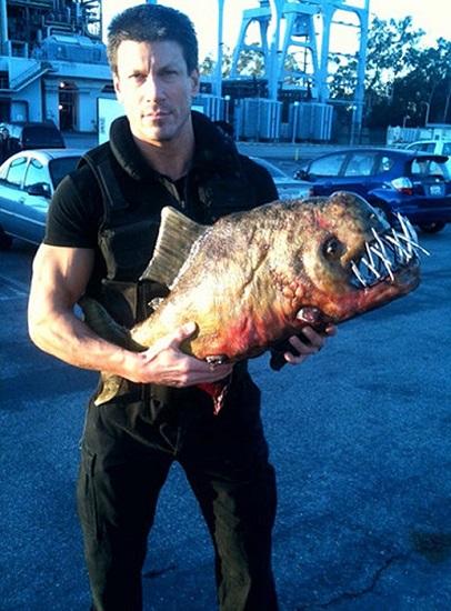 Glamourland Paul Logan piranha