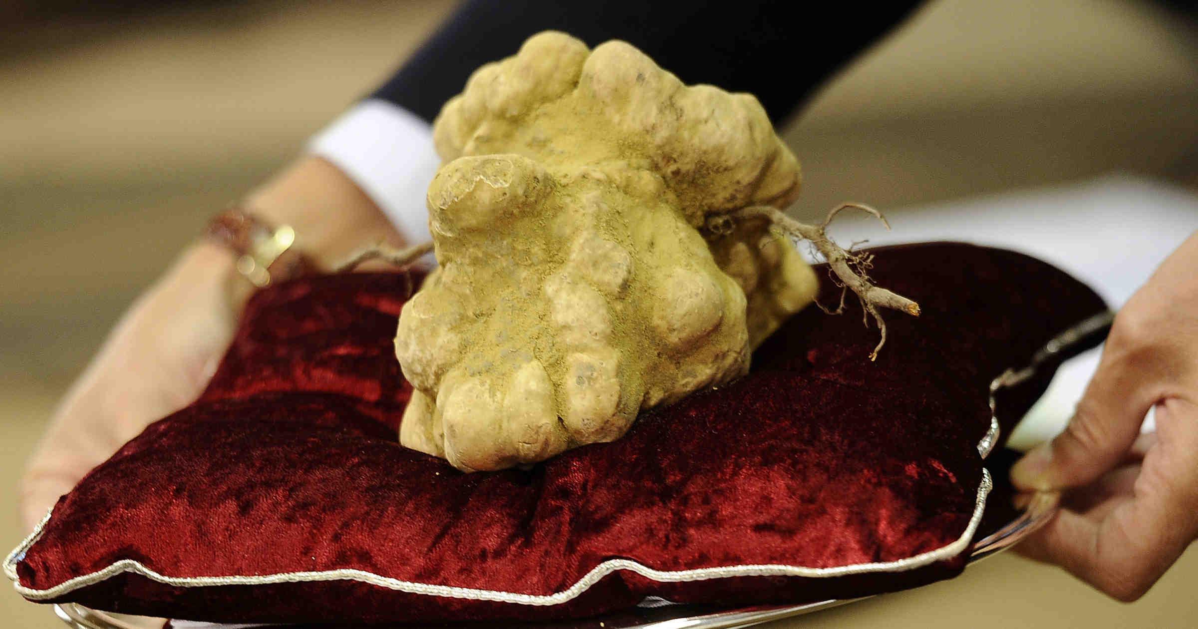 's Werelds grootste witte truffel geveild