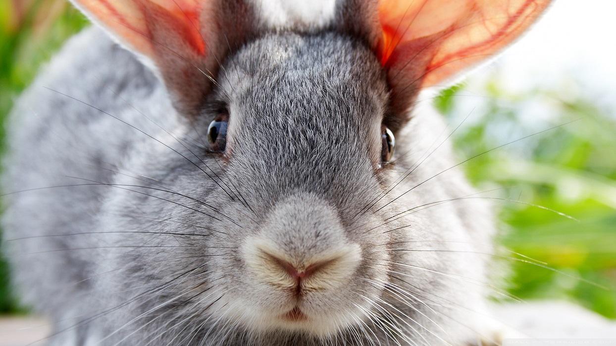 Glamourland konijn