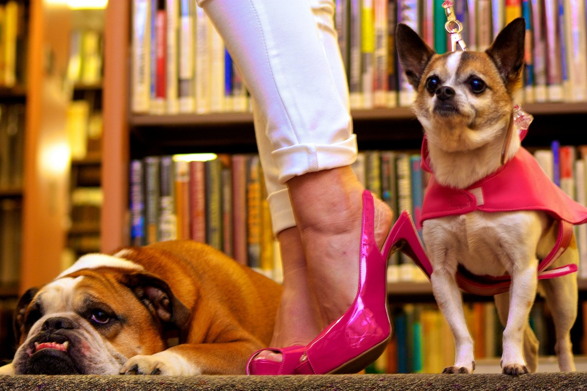 Glamourland Legally Blonde